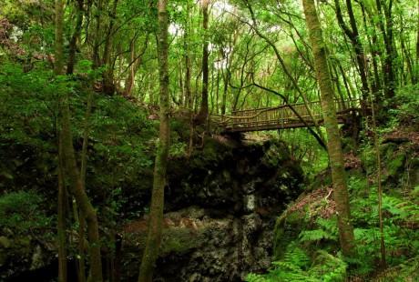 Bosque de Los Tilos · ACE San Andrés y Sauces · Vanmarty.com